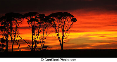 Sunrise sets the sky ablaze in the Western Australian Wheat...