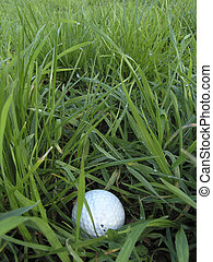 Challenging shot - Golf ball in rough long grass presents...
