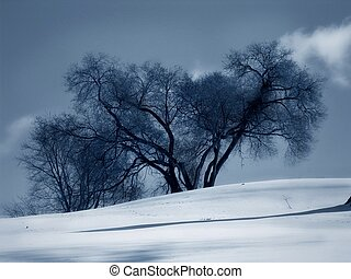 Winter - trees snow drifts