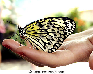 Butterfly on hand - Butterfly resting on woman's hand