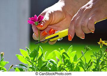 Pruning - Flower Pruning