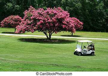 Crepe Myrtle Golf - Golf cart next to crepe myrtle
