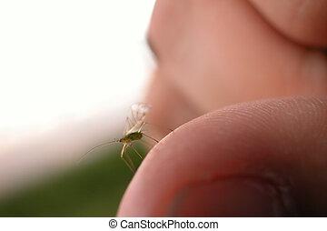 vert, insecte