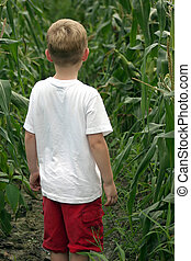 Are We Lost - A boy standing in a cornfield