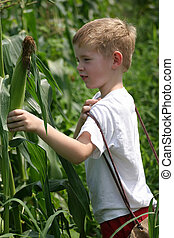 Children In The Corn - A little boy in a field picking corn.