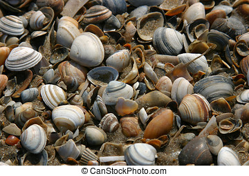 Shells on the beach - Lots of shells washed ashore on the...