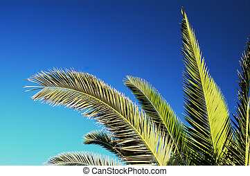 palm tree branches in the morning sun, greek islands
