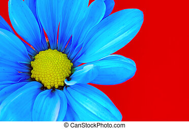 Blue Flower - Photo of a Blue Flower