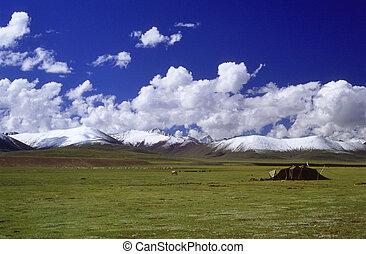 Grassland - The grassland in Tibet