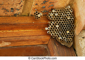 wasps nest - Wasps nest in a window pane