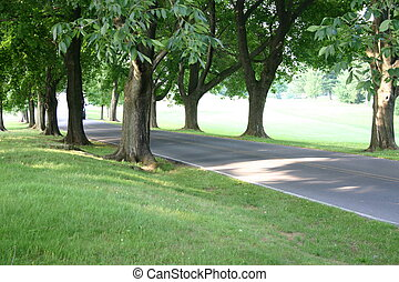 Tree-Lined Drive - Trees lining the drive into the Reading...