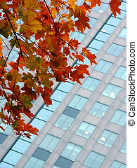 Autumn in a city - Autumn leaves against a corporate...