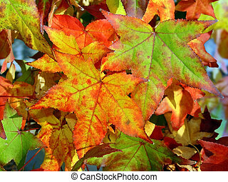Autumn background - Colorful autumn leaves