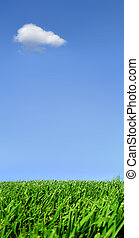 Lonely cloud - Background of sky and grass