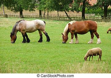 Two horses grazing.