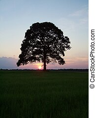 Sunset Tree - Tree silhouetted by sunset