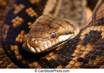 serpiente, alarma