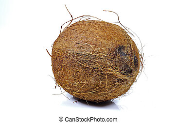 Coconut - Photo of a Coconut