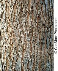 Bark - Teak Tree Bark