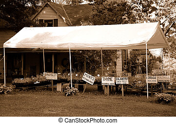 Herbs For Sale - Herb Farm - A tent shades the herbs from...