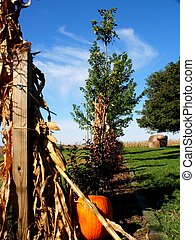 Country Pumpkin - Halloween pumpkin set along wood fence