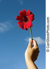 Flower For You - Woman holding a gerbera against blue sky