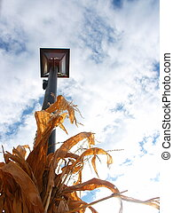 Midwest Corn - Corn, lampost and sky in Midwestern town
