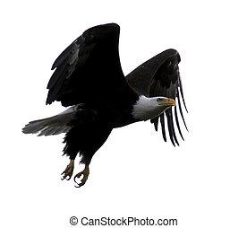 calvo, águia, voando, asas, Estendido