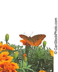Orange Butterfly - Great Spangled Fritillary (Speyeria...