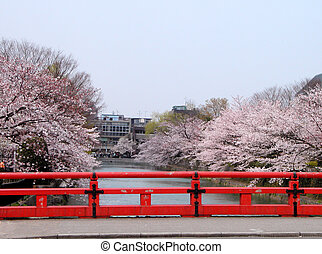 Spring canal - Beautiful spring canal with a traditional...