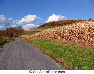 Country Road - country road, autumn
