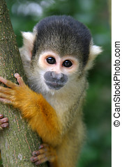 Cute squirrelmonkey - Squirrelmonkey