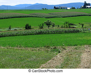 Vermont Farm Fields - a view over Vermont farm fields...