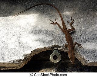 Crypt Dweller - Lizard entering into burial crypt