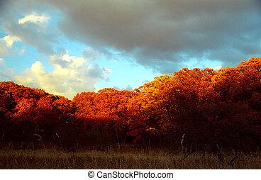 autumn clouds - Arboretum park in Lisle, IL
