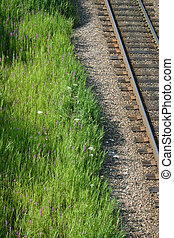 traintrack shoulder - Queen Anne's lace and Purple Vetch...