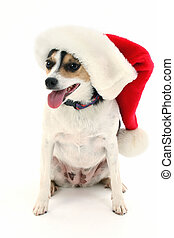 Santa Dog Hat - Adorable dog sitting with santa hat on Shot...