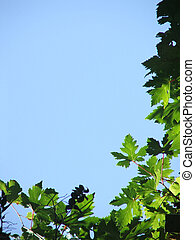 Grape vine border - Natural page border on two sides