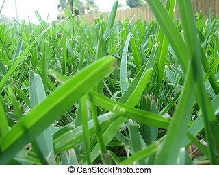 Blades Of Grass - shot of close-up of grass