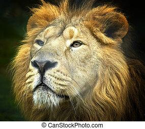 Regal - Close up portrait of a lion