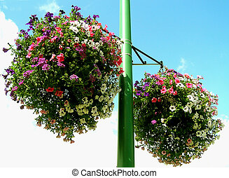 Hanging Baskets - Flower scent in the air beats polution