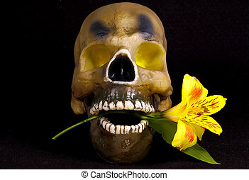 Skull With a FLower - Skull With a Flower in its Mouth