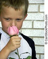 rose smelling - little boy smelling a rose