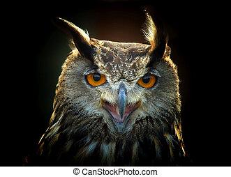 Eagle owl - eagle owl portrait