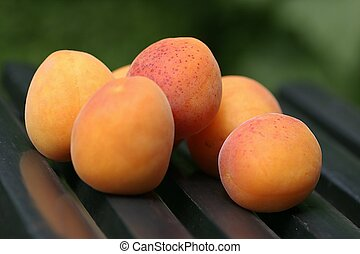 Apricots on a chair in the garden