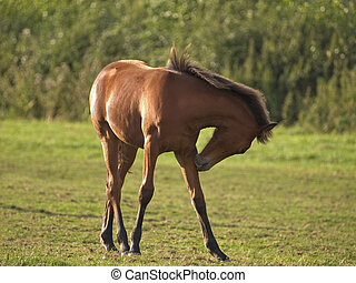 Foal - Young foal in a field