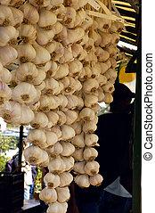 Garlic Braids (Allium sativum) - Garlic (Allium sativum)...