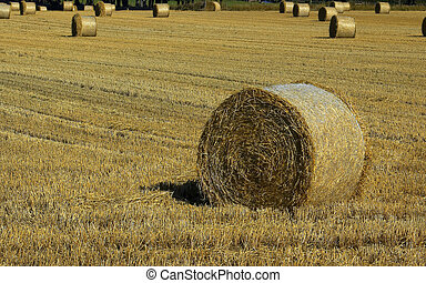 hay bale - summer hay bale in a scottish field