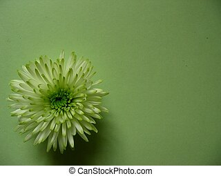 green flower on green background with room for copy