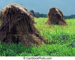 Haystacks 4 - Haystacks in field in Ohio
